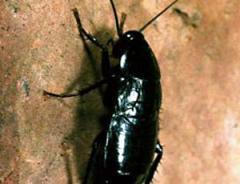 scaraf.stampa