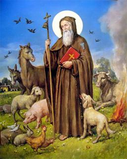sansepolcro festa di sant antonio abate archivio del